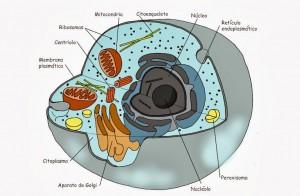 cáncer de mama, ginecología, ginecólogo,