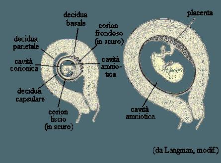 hematoma embarazo
